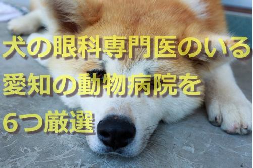 犬の眼科専門医のいる愛知の動物病院を6つ厳選