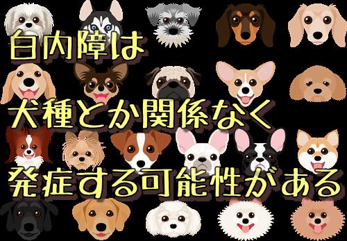 白内障は犬種とか関係なく発症する可能性がある