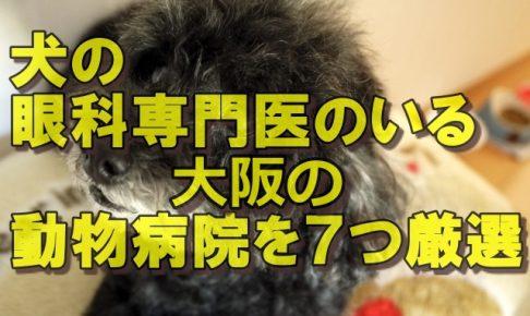 犬の眼科専門医のいる大阪の動物病院を7つ厳選