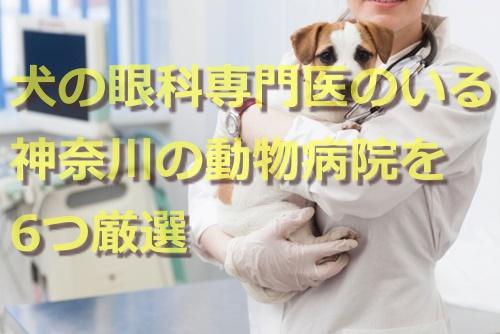 犬の眼科専門医のいる神奈川の動物病院を6つ厳選