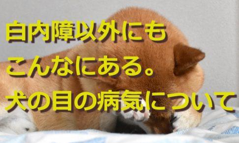白内障以外にもこんなにある。犬の目の病気について