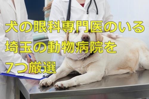 犬の眼科専門医のいる埼玉の動物病院を7つ厳選