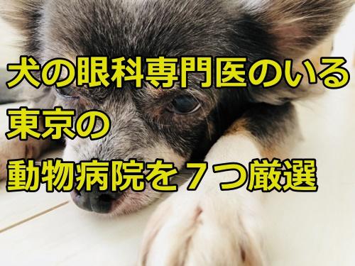 犬の眼科専門医のいる東京の動物病院を7つ厳選