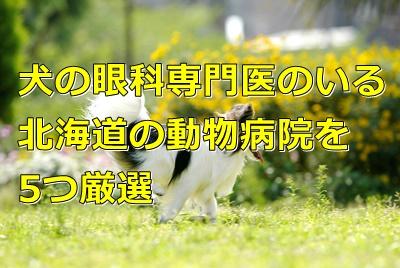犬の眼科専門医のいる北海道の動物病院を9つ厳選