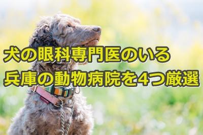 犬の眼科専門医のいる兵庫の動物病院を4つ厳選